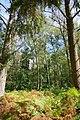 Hambacher Forst bei Morschenich DE 2018-09-09 G.jpg