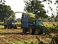 Harvesting maize, Longaller (2) - geograph.org.uk - 1001003.jpg