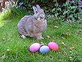 Hase mit Ostereiern (1).jpg