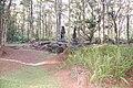 Hawaii Lava Tree State Park SAC05.JPG