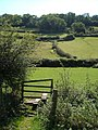 Hedges and fields at Branscombe - geograph.org.uk - 240916.jpg