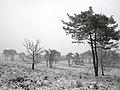 Heide in de Sneeuw (32703924682).jpg