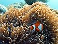 Hello Nemo.jpg