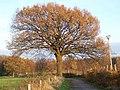 Herbstlicher Baum - panoramio.jpg