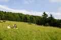 Hi-Mountain-top-meadow ForestWander.JPG