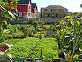 High Point community garden.jpg