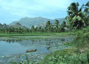 తమిళనాడు రాష్ట్రంలోని కన్యాకుమారి వద్ద సుందరమైన ఒక చెరువు