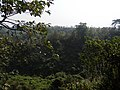 Himchori Hills Biodiversity(botanical).jpg