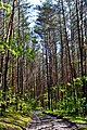 Hishyn Kovelskyi Volynska-Pryrichnyi nature reserve-view from the forest road-2.jpg