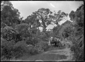 Horse-drawn wagonette on the West Coast Road, North Auckland ATLIB 287318.png