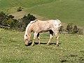 Horse near Kiama.jpg