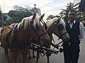 Horses and carriage in Izmir, May 22, 2015.jpg