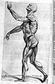 "Human muscles, ""Compendiosa.."", T. Geminus, 1553 Wellcome L0002879.jpg"