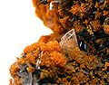 Hutchinsonite-Orpiment-es35b.jpg