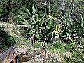 Iguape - SP - panoramio (257).jpg