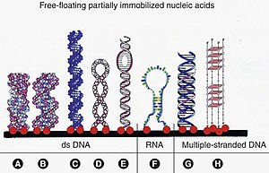 DNA microarray - Image: Immobilization of Different Nucleic Acid Structures