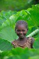 In the Taro Garden, Wollaita Tribe, Ethiopia (15021631329).jpg