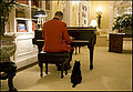 India the Cat Listens to a Piano.jpg