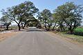 Indian National Highway 86 - Madhya Pradesh - 2013-02-21 4237.JPG