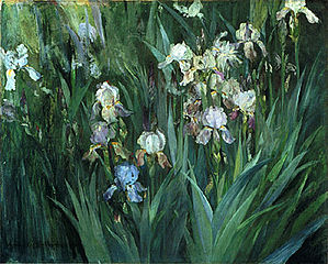 Iris at Dawn