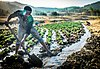 Irrigation of crops, near Gonder.jpg