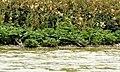 Island vegetation - geograph.org.uk - 1155593.jpg
