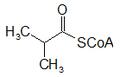 Isobutiril CoA.png