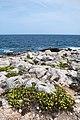 Isola di San Domino, Tremiti (FG) Italia - 21 Agosto 2013 - panoramio.jpg
