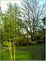 January Frost Botanic Garden Freiburg Coloured Bamboo - Master Botany Photography 2014 - panoramio.jpg