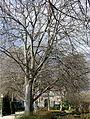 Jardín Botánico de Madrid en febrero-040 (16023276993).jpg