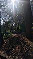 Jardim da Fundação Calouste Gulbenkian (25810767990).jpg