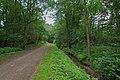Jenfelder Beek Padd2.jpg