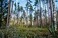 Jersikas pagasts, Latvia - panoramio (7).jpg