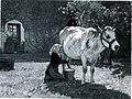 Julien Dupré La Vache Blanche.jpg