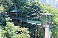 KL Forest Eco-Park Canopy Walk 7.jpg