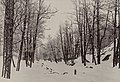 Kaivopuisto talvella - G30693 - hkm.HKMS000005-km003x4c.jpg