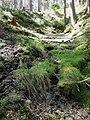 Kalter Brunnen - panoramio.jpg
