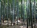 Kamakura Takedera 03.jpg