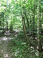 Kaniv Nature Reserve (May 2018) 56.jpg