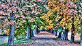 Kastanienallee im Herbst - panoramio.jpg
