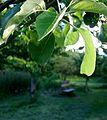 Kenworthy Wood orchard.jpg
