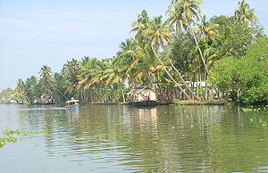 Kuttanad - Kettuvallams line up in the Kuttanad region