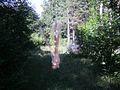 Kiil ja ämblik Mändjala metsas Saaremaal.JPG