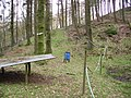 Kirkby Gill Wood - geograph.org.uk - 338893.jpg
