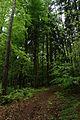 Kleť, horský les.jpg