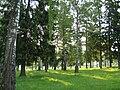 Kolchugino in park 1.jpg