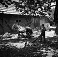 """Konji ženejo """"gepəl""""- meljejo jabolka za prešanje, Artiža vas 1950.jpg"""
