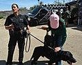 LAPD K9 2.jpg