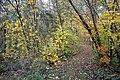 LSG Sudmerberg - Herbstwald (6).jpg