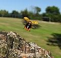Ladybird (19858086936).jpg